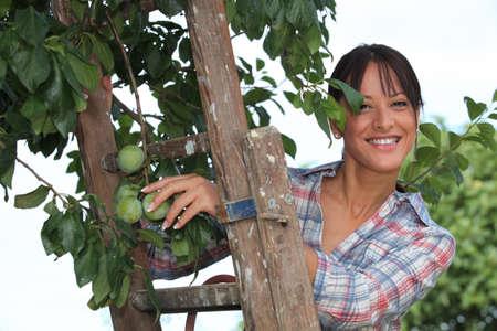 look pleased: Woman picking plums