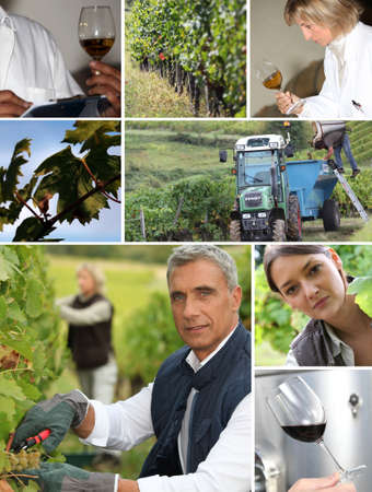 wine grower: Wine Work Stock Photo
