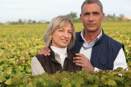 couple of viticultors amid vineyards photo