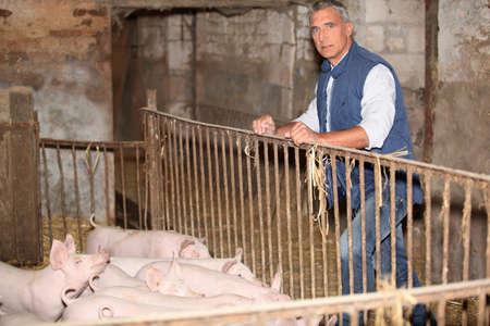 epidemic: Farmer stood with pigs