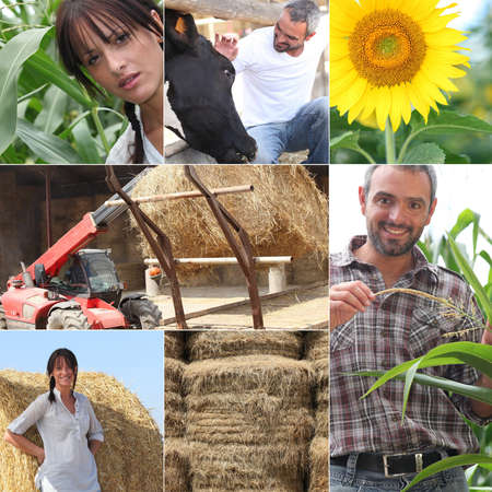 agriculture Stock Photo - 11824352