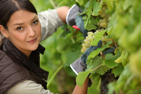 young woman working in a vineyard photo