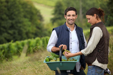 couple of wine-growers at harvest time photo