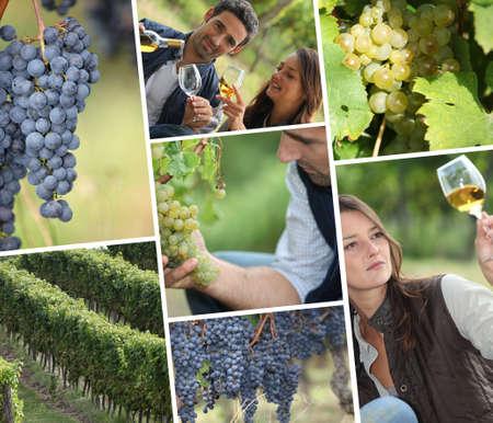 montage: Tasting white wine