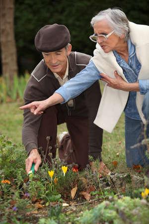 65 years old: Elderly couple gardening Stock Photo