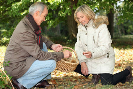 Couple collecting chestnuts in the woods photo