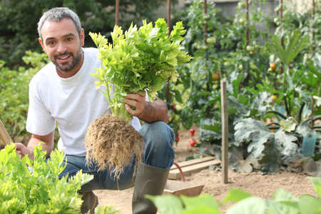 grower: Man pulling celery out of the ground