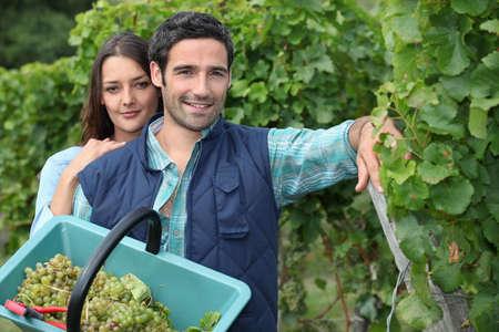look pleased: Grape picking Stock Photo