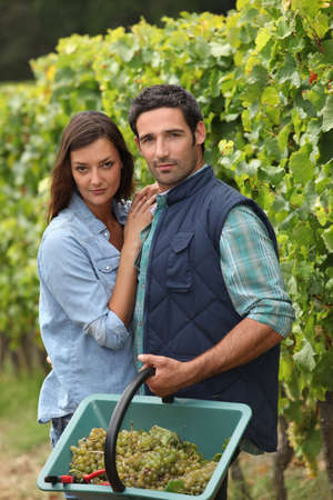 Couple picking grapes photo