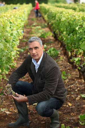 Farmer kneeling in vineyard photo