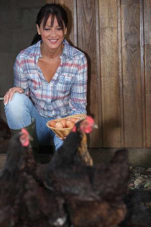 collect: Mujer recogiendo huevos frescos de gallina Foto de archivo