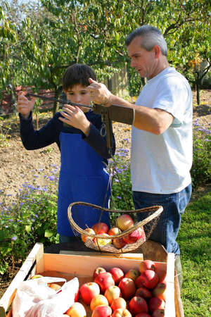 Father and son picking apples photo