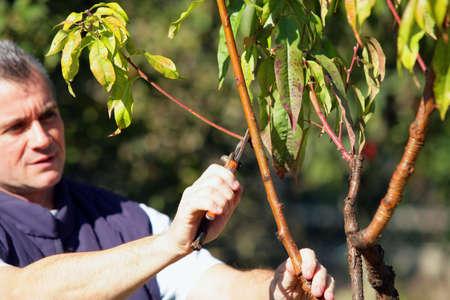 bush trimming: Man cutting branches Stock Photo