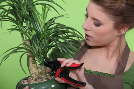 houseplant: Woman pruning a houseplant