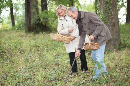 Couple picking mushrooms Stock Photo - 12903329
