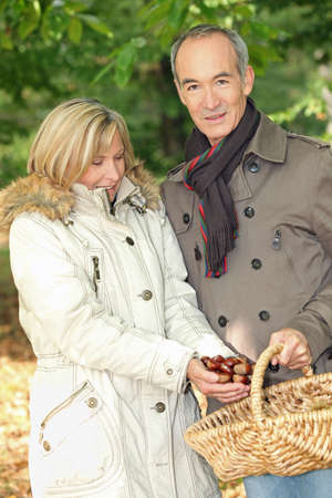 stood up: Couple collecting chestnuts in basket Stock Photo