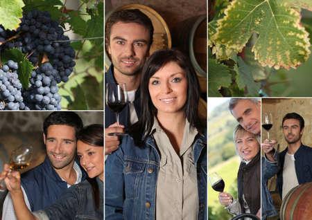 oenology: tasting wine