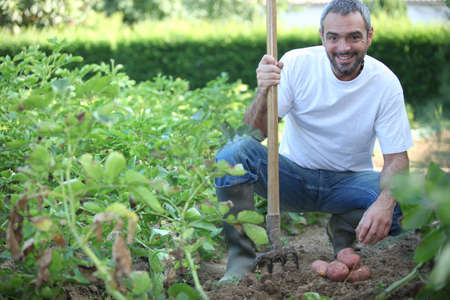 productive: 40 years old man harvesting potatoes with his fork Stock Photo