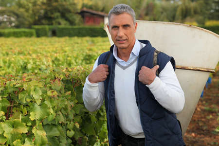 mature grape-picker carrying hod on his back Stok Fotoğraf