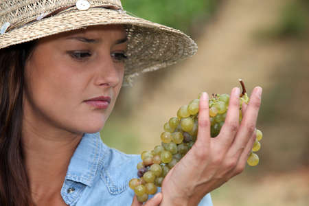 Woman looking at grapes photo