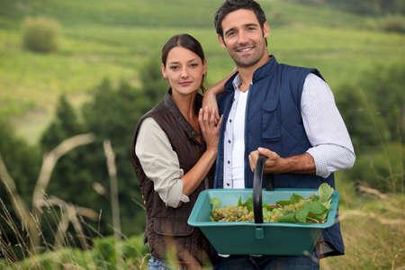 life partner: Attractive couple grapepicking Stock Photo