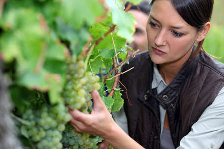 agriculturist: Woman pruning vine Stock Photo
