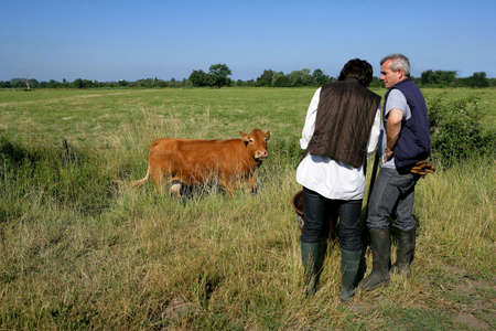 Farming couple in a field with a cow photo