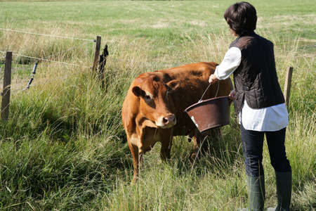 Farmer giving a cow some water to drink photo