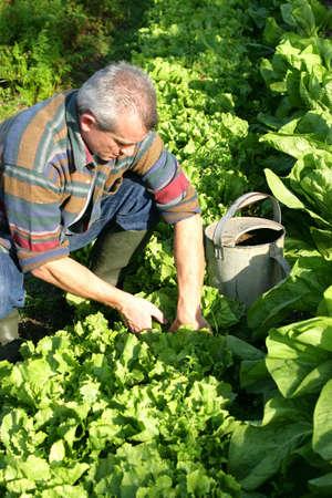 drudgery: Man working in his garden
