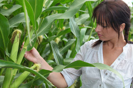 corn cob: portrait of a woman in corn field