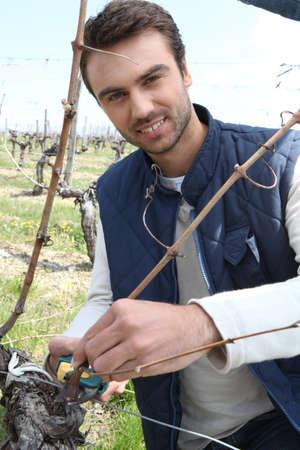 terroir: A grape grower Stock Photo