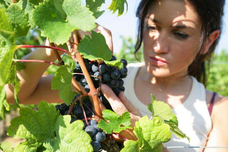 woman working in a vineyard photo