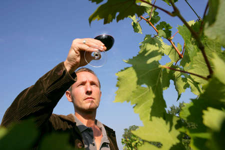 wine grower: Man tasting a wine