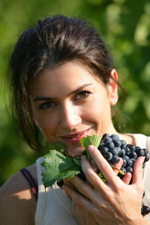 wineyard: woman gathering grapes in a vineyard Stock Photo