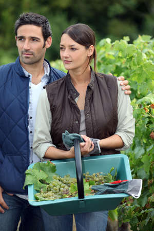 young couple working in a vineyard photo