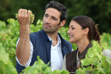 Farmer and wife inspecting grapes photo