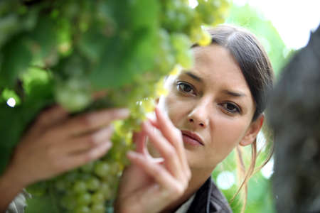 Woman inspecting grapes in a vineyard photo