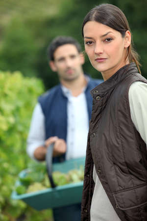 wine grower: Couple picking grapes off vine