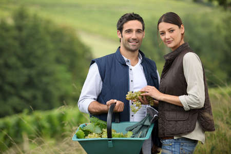 outside of the country: Attractive couple picking grapes