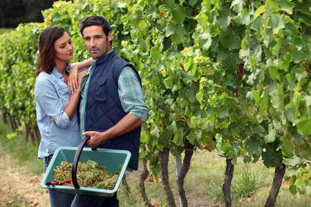 haciendo el amor: Pareja recolección de uvas