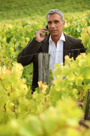 Man using a phone in a vineyard photo