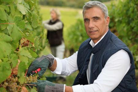 Winegrower photo