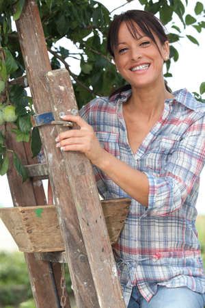Woman picking apples from tree Stock Photo - 13940058