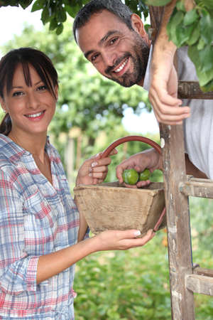 Couple picking plums photo