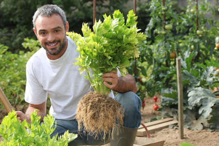 root vegetable: Man in vegetable garden