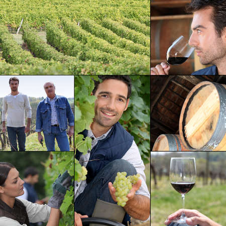 collage travel: Montage of life on a vineyard