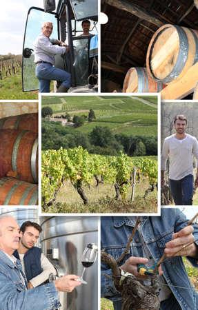 Production of wine photo
