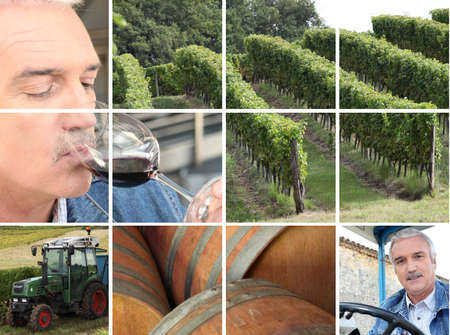 wine grower: Montage of wine production