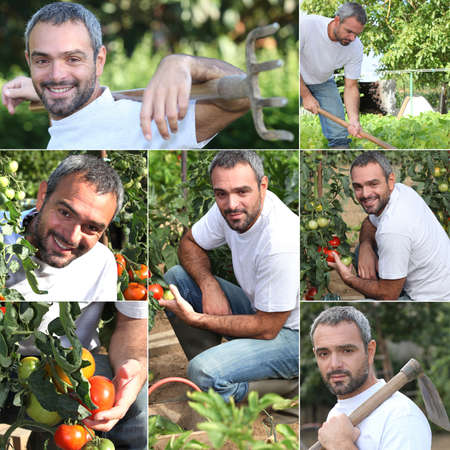 urban gardening: Vegetable gardener