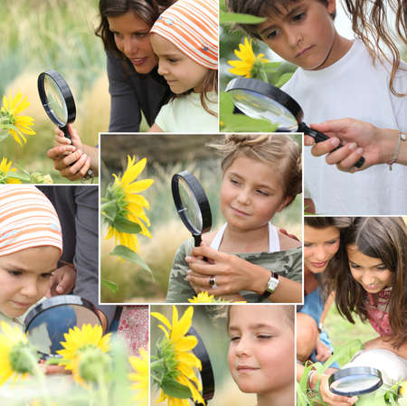 Montage of kids examining sunflowers photo